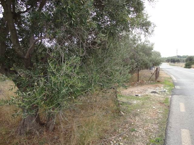(For Sale) Land Large Land  || East Attica/Anavyssos - 6.800Sq.m, 150.000€